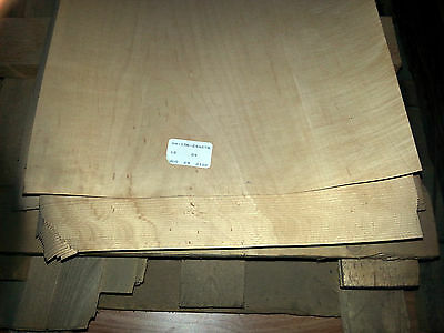 "240sq/ft Maple wood veneer 12"" x 120"" raw no backing 1/40"" thickness ""A"" grade"