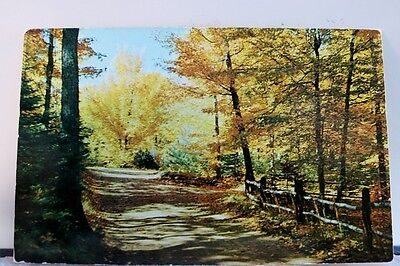 Scenic Woodland Trail Postcard Old Vintage Card View Standard Souvenir Postal PC