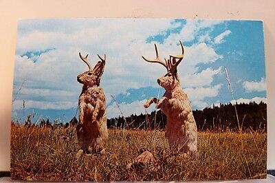 Scenic Jackalope Postcard Old Vintage Card View Standard Souvenir Postal Post PC