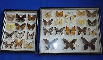 Vintage Malaysian  Exotic Butterfly Collection Mounted & Framed Taxidermy Moths