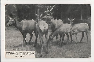 PORTLAND - Herd of Elk from 1912 Elks Grand Lodge Reunion Parade