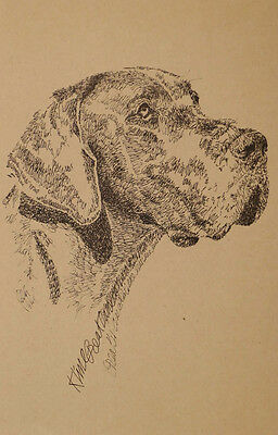 GREAT DANE DOG ART #77 DRAWN FROM WORDS by Stephen Kline Signed Lithograph GIFT