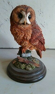 Country Artists Tawny owl