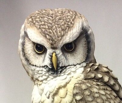 Stunning !! Country Artists Hawk Owl With Pine Cones