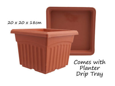 12 garden plant pot square with saucer 20cm 16cm high terracotta bulk wholesale