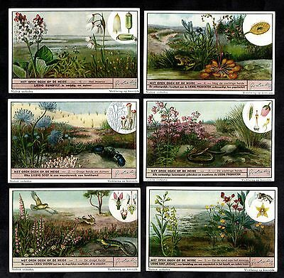 Heathland Animals & Plants Cards Set 1951 Liebig Sundew Reptiles Flowers Insects
