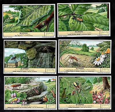 Spiders and Webs Cards Set 1958 Liebig Insects Araignees Garden