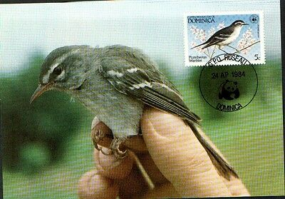 (70397 ) Maxicard - Dominica - Warbler 1984