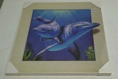 5D Dolphin Picture