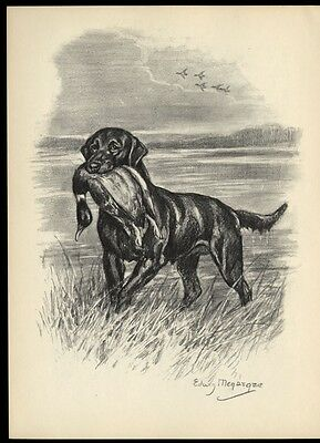 Labrador Retriever: after Painting by Edwin Megargee: Authentic 1953 Book Plate
