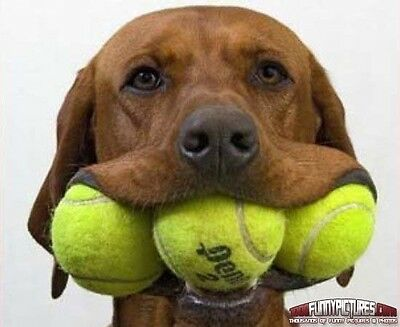 10 Used Tennis Balls For Dogs,Dog Ball / Toy,cricket balls, Beach Etc