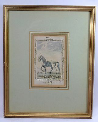 Antique Andrew Bell Horse Engraving Bookplate in Gilded Frame