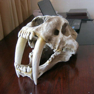 1:1 Saber-Tooth Tiger Resin Skull Replica Collection Head Model Home Decor White
