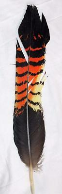 1 Black Red Tail Cockatoo Feather Native American Fly Tying Peyote Pow Wow (D1)