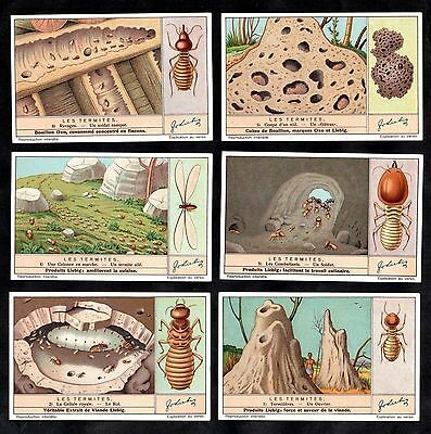 Termites Insects Cards Set 1937 Liebig Wood Beetle Colonies Soldiers Nest Hill