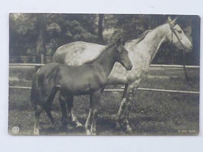 Postcard Victoria - Real Photo - Mother And Foal -  C1906