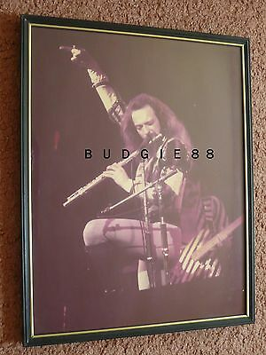 Jethro Tull / Ian Anderson - Framed 11x14 picture in 1975 - poster live concert
