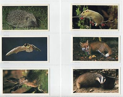 John Player (Grandee) Britains Nocturnal Wildlife 1987 Complete Set Of 30 Cards