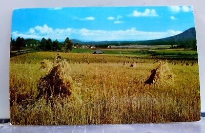 Scenic Wheat After the Harvest Postcard Old Vintage Card View Standard Souvenir