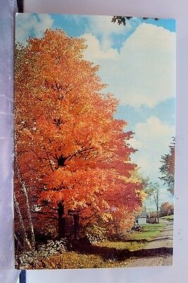 Scenic Country Road Glistening Gold Postcard Old Vintage Card View Standard Post