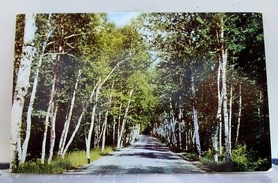 New Hampshire NH Shelburne White Mountains Postcard Old Vintage Card View Post