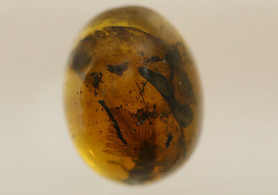 Burmite Amber Fossil - WT1980 Rare Feather
