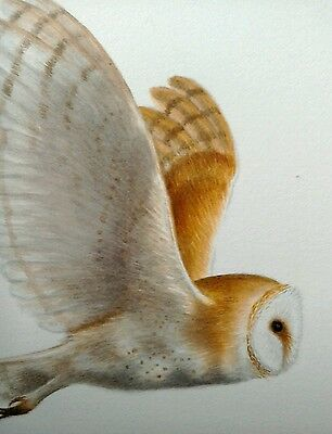 Original signed watercolour painting of a barn owl. This is not a print