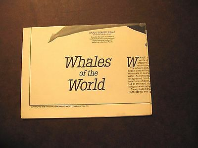 1976 Whales of the World National Geographic Society Reference Map