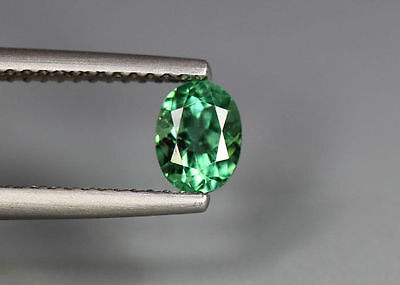 0.64 Cts_Simmering Ultra Nice Gemstone_100 % Natural Neon Green Apatite_Brazil