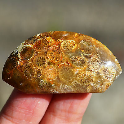 35ct Beauty Pattern Natural Fossil Coral Agate Fancy Shape Cabochon Z228