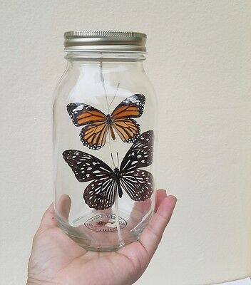 Real 2 Butterfly Insect Glass Bottle Display Art Taxidermy Moth Display Decor