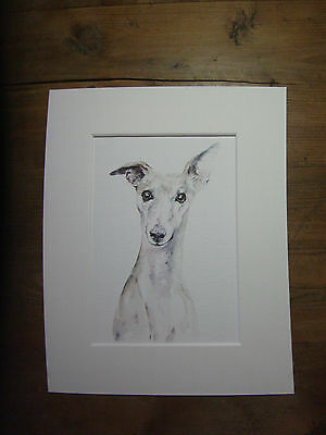 """Watercolour Whippet, greyhound, print of original painting, in 10"""" x 8"""" Mount"""