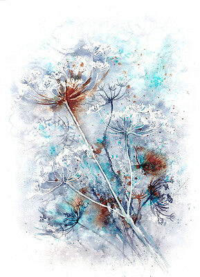 Cowparsley watercolour, print of original painting A3 size on watercolour paper