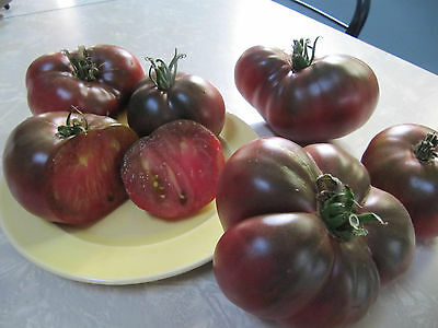 Cherokee Purple & Chocolate tomato 40+ fresh organic seeds of each for 2019