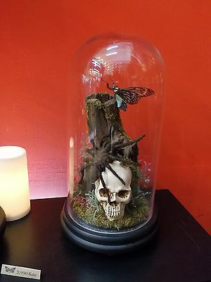 Spider Insect Butterfly Skull Resin Glass Bottle Display Art Taxidermy Real Deco
