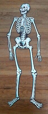 """Vintage Beistle Double Sided Jointed Halloween Skeleton LARGE 54 1/2"""""""