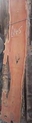 """Solid YEW Waney edged board 14 """" wide 82"""" tall x 2"""" thick"""