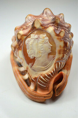 Beautiful hand carved antique cameo conch shell lady with ribbon in her hair