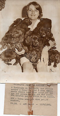 Photo.harlingen(Pays-Bas).onze Chiots Cocker.chien.animal.1963.