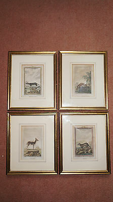 4 X 19Th Century Antique Animal Engravings /pictures