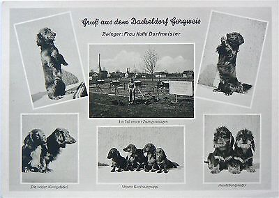 Postcard - Dogs: A Collection Of Hopefuls. Earlier Rp Image Card