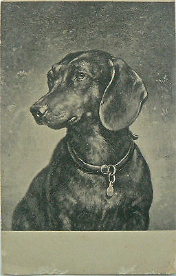 Vintage Postcard.dogs.a Great Drawing Of A Very Handsome Dog.undivided Back
