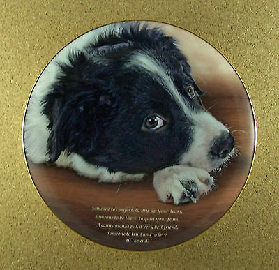 Cherished Border Collies SOMEONE TO COMFORT Plate Dog Danbury Mint Collie Puppy