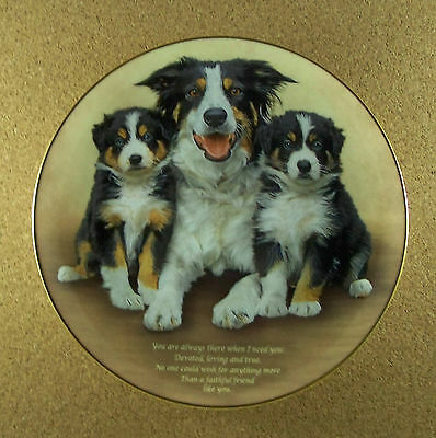 Cherished Border Collies FAITHFUL FRIEND Plate Collie Danbury Mint Dog Puppy HTF