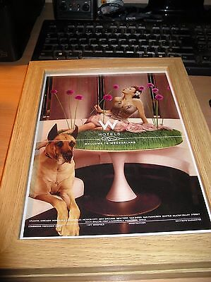 Whotels Colour Advert With Great Dane Framed In Light Wood