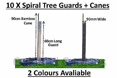 10 X (60cm x 50mm) Spiral Tree Guards + Canes Rabbit Hedge Saplings Fence Stake