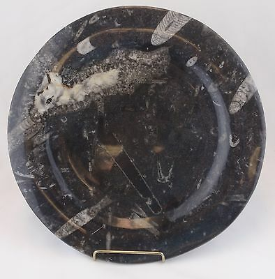 Polished Marble Onyx Plate with Visible Fossils