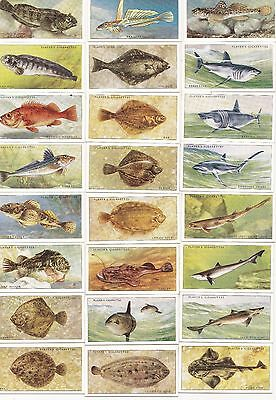 Players   1935 Sea Fishes complete set of 50