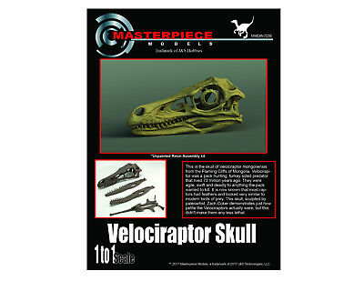 Velociraptor skull 1 to 1 scale