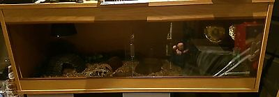 4ft vivarium starter kit for bearded dragon